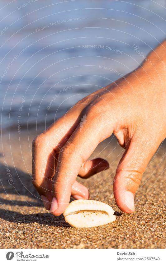 Kinderhand greift nach einer Kaurimuschel am Strand Sommer Hand Meer Tier Freude Küste Sand Kindheit Finger berühren Sommerurlaub 8-13 Jahre Schnecke Muschel
