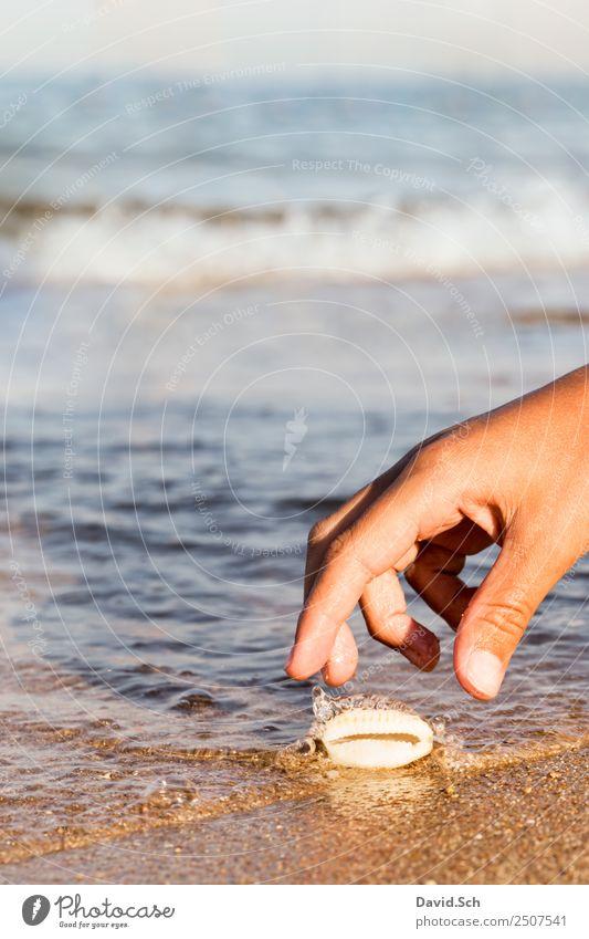 Kinderhand greift nach einer Kaurimuschel am Strand Freizeit & Hobby Ferien & Urlaub & Reisen Sommer Sommerurlaub Meer Wellen Hand Finger 8-13 Jahre Kindheit