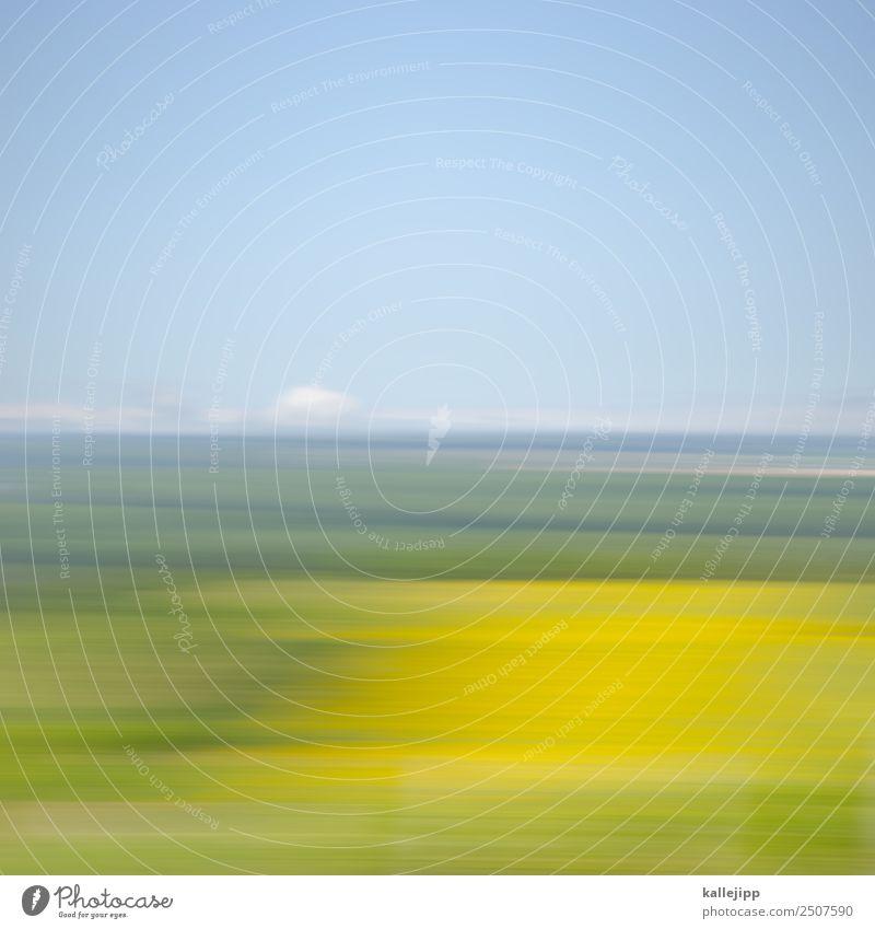 sunflowerssssssssssssssssssss Natur Sommer Pflanze Landschaft Blume Tier gelb Umwelt Bewegung Blühend Geschwindigkeit Sommerurlaub Wolkenloser Himmel Autofahren