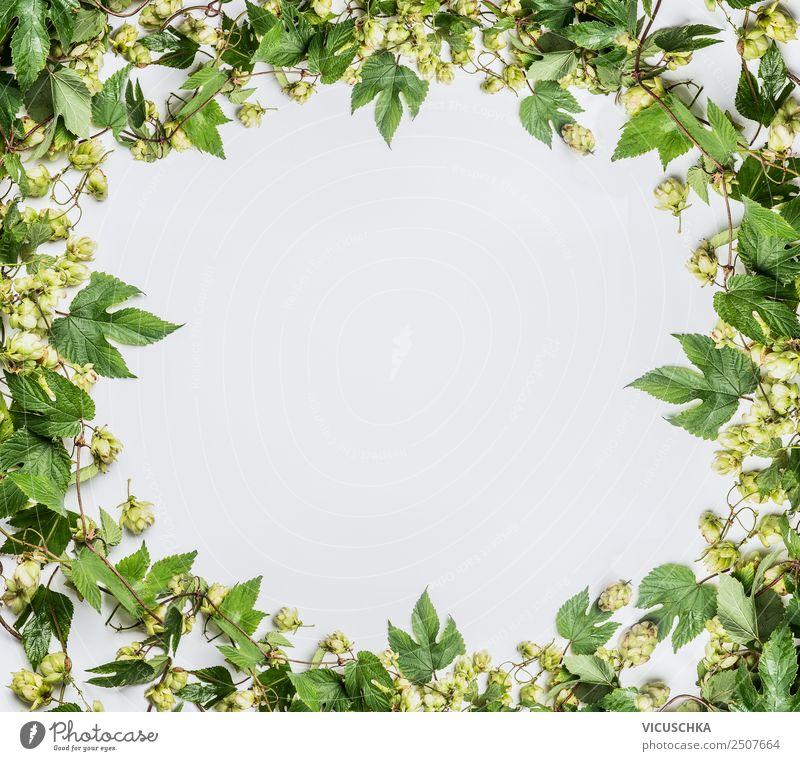 Hopfen Rahmen auf weißem Hintergrund Stil Design Alternativmedizin Oktoberfest Erntedankfest Pflanze Dekoration & Verzierung Ornament Hintergrundbild