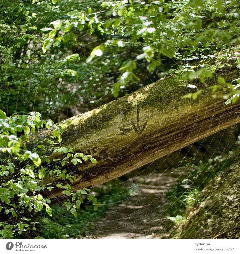 Bück dich Natur Baum Wald Umwelt Landschaft Wege & Pfade gehen wandern Ausflug Abenteuer Hilfsbereitschaft Lifestyle Hinweisschild Sicherheit Idylle Zeichen