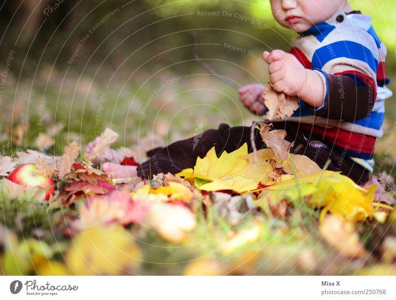 Fipsi hat Spaß Mensch Natur Freude Blatt gelb Herbst Gefühle Gras Park Baby Kindheit sitzen Fröhlichkeit Schönes Wetter Neugier Kleinkind