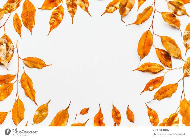 Goldene Herbstblätter, Rahmen auf weiß Stil Design Feste & Feiern Natur Blatt Dekoration & Verzierung Ornament gelb Hintergrundbild Entwurf September Oktober
