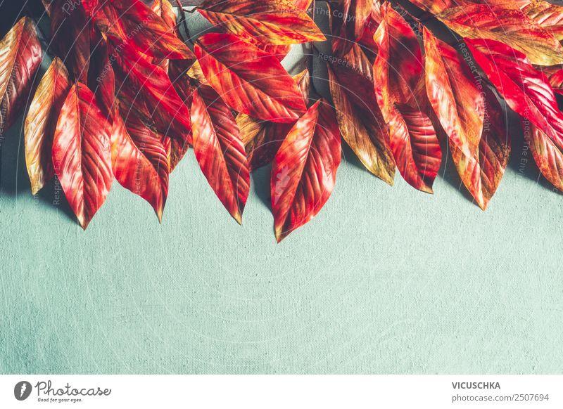 Rot orange Herbslaub Border auf hellblau Stil Design Natur Herbst Pflanze Blatt Dekoration & Verzierung Ornament retro gelb Hintergrundbild Sale Herbstlaub