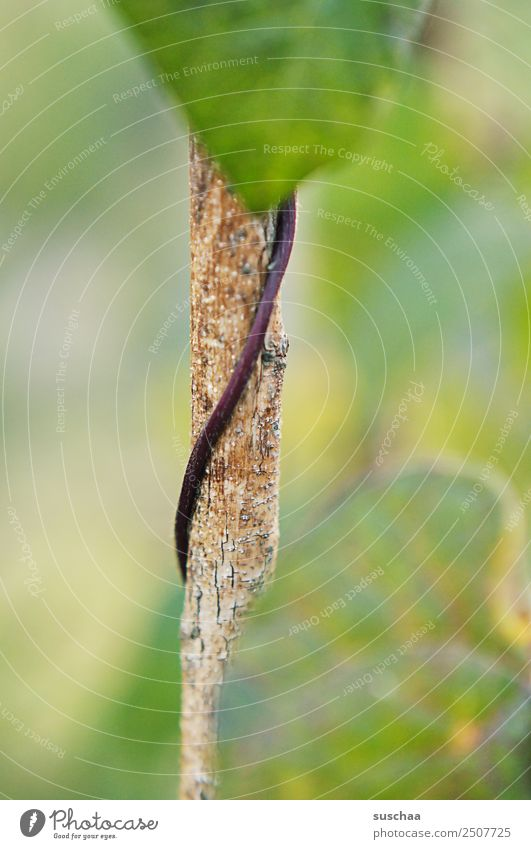 schlängelwachstum Natur Pflanze grün Blatt Garten Park Wachstum Landwirtschaft Gemüse Windung schlangenförmig