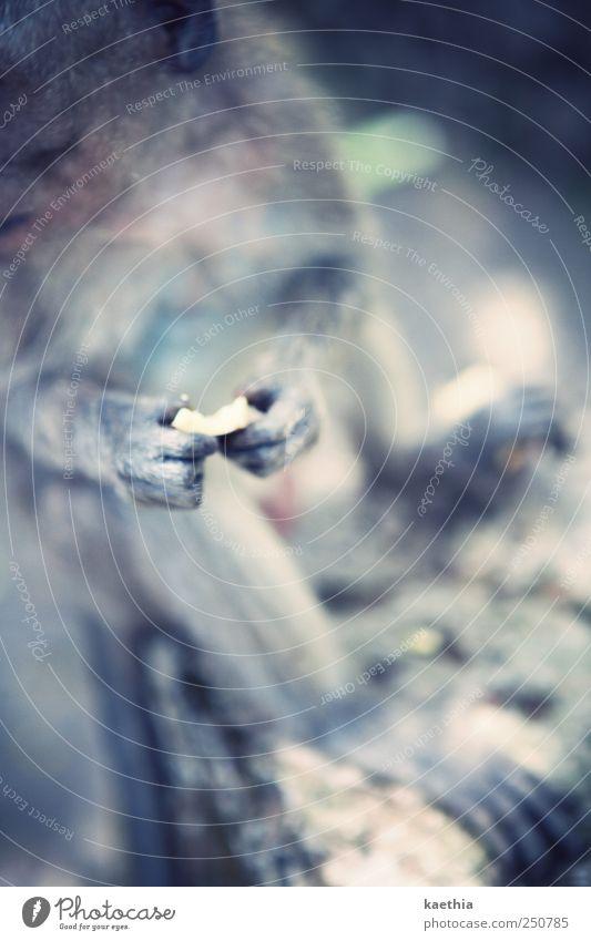 stolen heart blau Ferien & Urlaub & Reisen Sommer Tier Ernährung grau Haare & Frisuren Lebensmittel Stein sitzen Finger Wildtier Neugier Fell Asien Mut