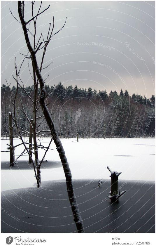 Stille Umwelt Natur Landschaft Pflanze Luft Wasser Himmel Wolken Winter schlechtes Wetter Eis Frost Schnee Baum Wald Seeufer Moor Sumpf Teich Denken frieren