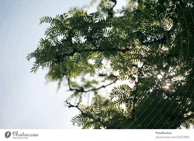 #A# green sky Umwelt Natur ästhetisch grün Baum Blatt Zweige u. Äste Farbfoto Gedeckte Farben Außenaufnahme Detailaufnahme Experiment Muster Menschenleer