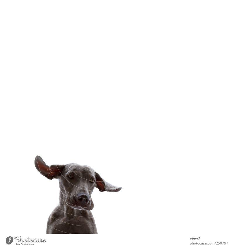freigestellt:: Tier kalt oben Hund Ordnung Beginn ästhetisch authentisch einzigartig Ohr einfach beobachten Tiergesicht Neugier entdecken machen