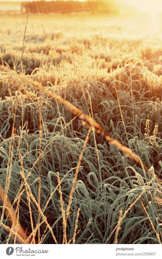 Tiefster Winter morgens um 6 Uhr im Hohen Venn Natur Landschaft Pflanze Sonnenaufgang Sonnenuntergang Sonnenlicht Klima Schönes Wetter Eis Frost Eiskristall