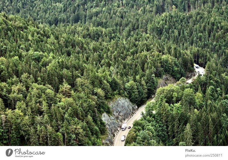 Fernpass Umwelt Natur Landschaft Pflanze Baum Wald Berge u. Gebirge Verkehr Verkehrswege Straßenverkehr Autofahren grün Tourismus Nadelwald fernpass Österreich