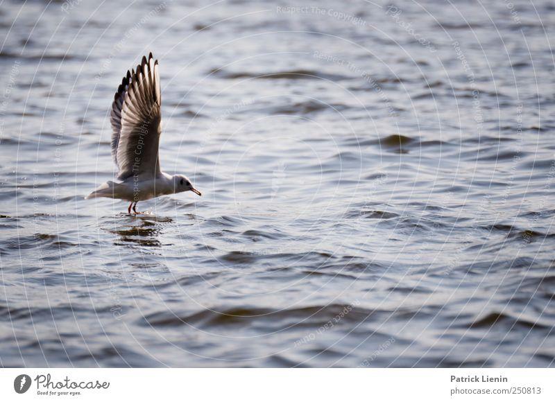 Auf die Plätze, Natur Wasser schön Tier Umwelt Küste Wellen Vogel elegant fliegen Wildtier Flügel beobachten leicht Möwe Flussufer