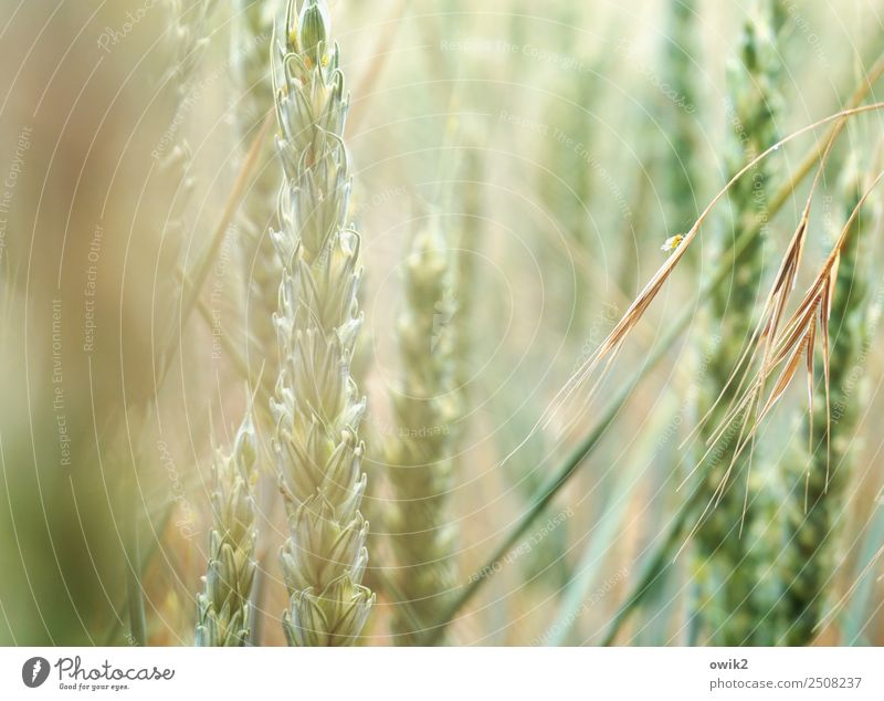 Auf Hoffnung hin Natur Pflanze grün Leben Umwelt Frühling Bewegung leuchten Wachstum Idylle Schönes Wetter Klima Duft Leichtigkeit Vorfreude