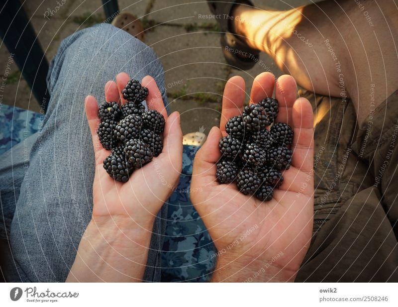 Alle Hände voll zu tun Mensch maskulin feminin Frau Erwachsene Mann Paar Partner Leben Finger Beine Fuß Hand Frauenhand Männerhand 2 45-60 Jahre Brombeeren
