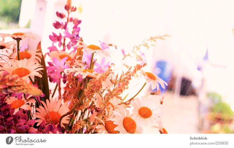 Pretty in Pink Dekoration & Verzierung Natur Pflanze Frühling Sommer Blume Gras Blüte Wildpflanze Blumenstrauß Duft natürlich mehrfarbig gelb rosa rot weiß