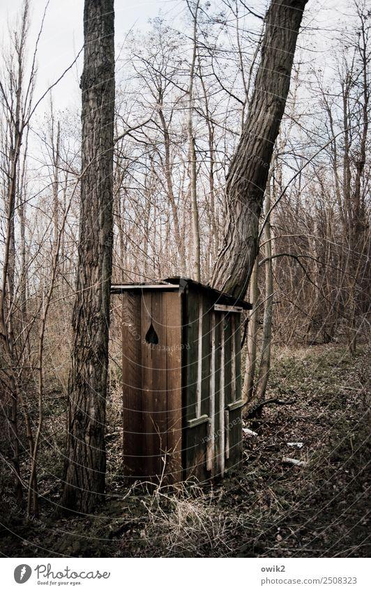 Notfallkoffer Umwelt Natur Landschaft Wolkenloser Himmel Schönes Wetter Pflanze Baum Sträucher Ast Baumstamm Wald Toilette Hütte Holz alt einfach natürlich