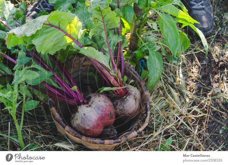 Natur Sommer Pflanze grün rot Blatt natürlich Garten Ernährung Erde frisch Industrie Boden Landwirtschaft Gemüse Jahreszeiten