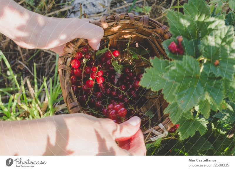 Frau Mensch Natur Pflanze Farbe grün Hand rot Erwachsene natürlich Garten braun Arbeit & Erwerbstätigkeit Frucht Ernährung frisch