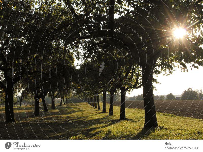 Chamansülz/Abendstimmung Natur grün Baum Pflanze Sonne schwarz Wiese Umwelt Landschaft Gras braun Feld glänzend ästhetisch Wachstum natürlich