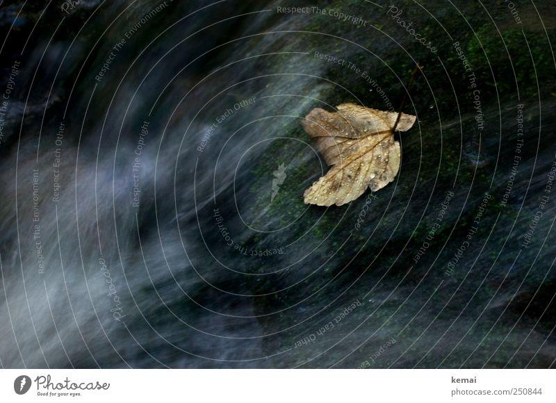 [CHAMANSÜLZ 2011] Ein Blatt im Wasser Natur Pflanze dunkel Herbst Umwelt nass Wassertropfen Bach fließen