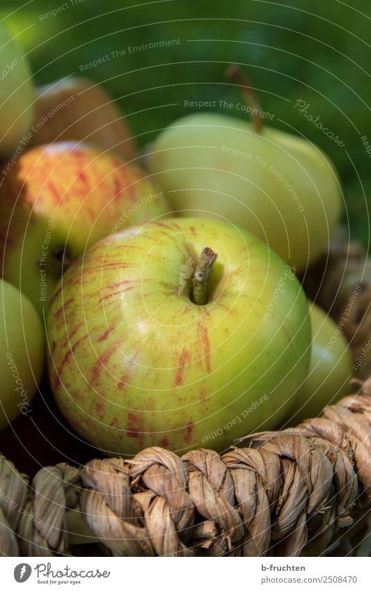 Ein Korb voller Äpfel Frucht Bioprodukte Vegetarische Ernährung Gesunde Ernährung Sommer Herbst Garten genießen Gesundheit Apfel Apfelernte Sammlung lecker