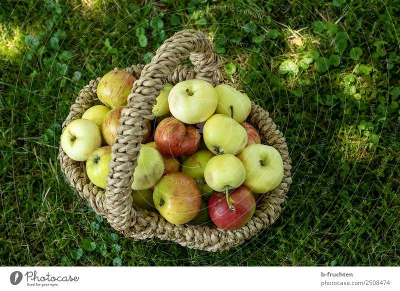 Streuobstwiese - Korb mit Äpfel Frucht Picknick Bioprodukte Vegetarische Ernährung Sommer Gras Garten Wiese frisch Gesundheit Apfel Sammlung Ernte lecker
