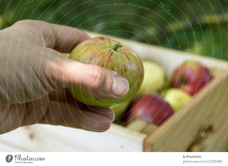 Frischer Apfel Frucht Bioprodukte Vegetarische Ernährung Gesunde Ernährung Landwirtschaft Forstwirtschaft Hand Finger Sommer Herbst Garten Wiese Kasten