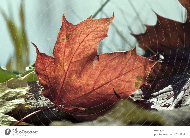 Herbst Bote Umwelt Natur Landschaft Pflanze Tier Erde Schönes Wetter Gras Blatt Grünpflanze Nutzpflanze Herbstbeginn Herbstfärbung Oktober Herbstlaub Garten