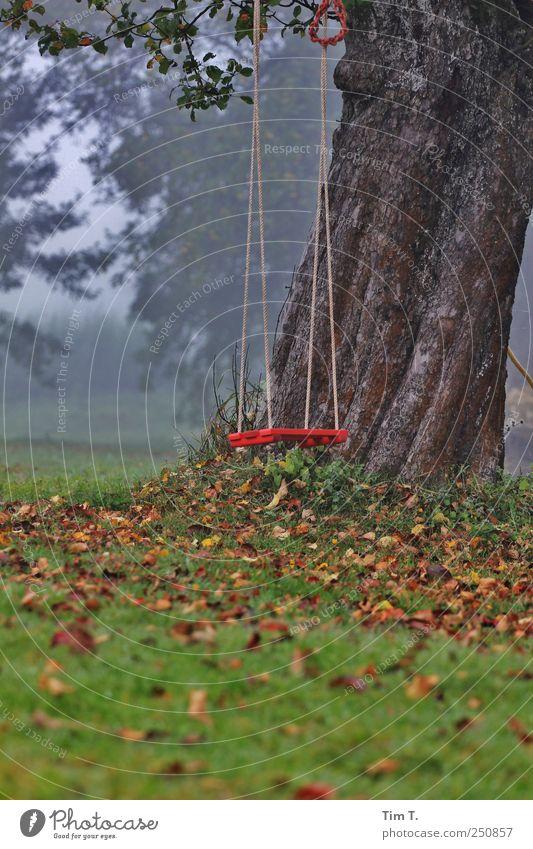 Apfelbaumtraum Umwelt Natur Herbst Baum Gras Blatt Garten Wiese Schaukel Farbfoto Außenaufnahme Menschenleer Morgendämmerung