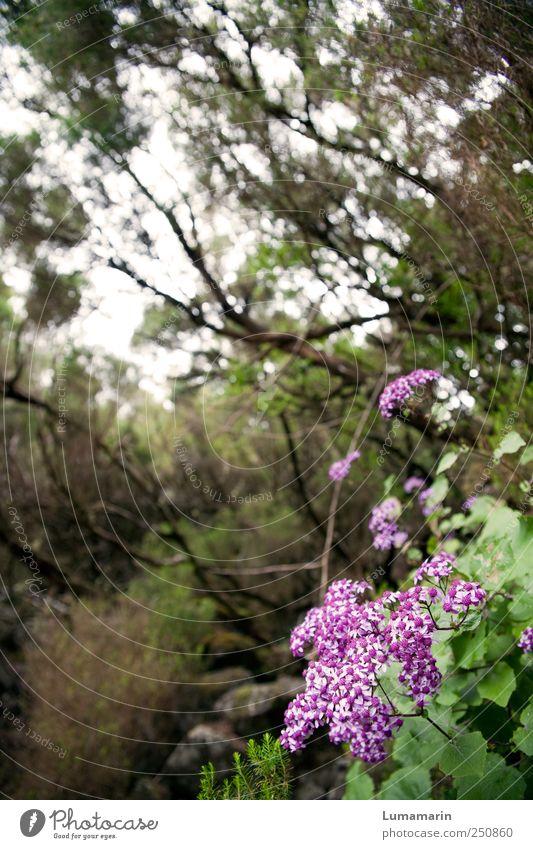 wild thing Umwelt Natur Pflanze schlechtes Wetter Blume Wildpflanze Wald außergewöhnlich schön einzigartig kalt klein nachhaltig natürlich braun grün violett
