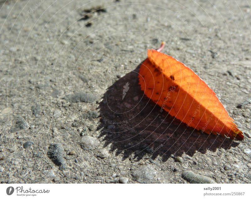 Zackiger Herbst Natur alt Pflanze Blatt ruhig Einsamkeit Farbe Straße orange braun ästhetisch natürlich Vergänglichkeit Bürgersteig Schönes Wetter