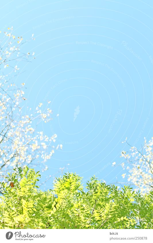 [CHAMASÜLZ 2011]- Bettwäsche: Morningfresh Ferien & Urlaub & Reisen Tourismus Feste & Feiern Valentinstag Muttertag Hochzeit Geburtstag Taufe Natur Pflanze