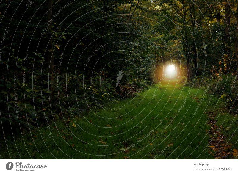 märchenwald Umwelt Natur Landschaft Pflanze Tier Erde Nebel Baum Gras Sträucher Moos Wald schön ruhig Gasse Wege & Pfade Tunnel Fußweg Ziel dunkel Märchenwald