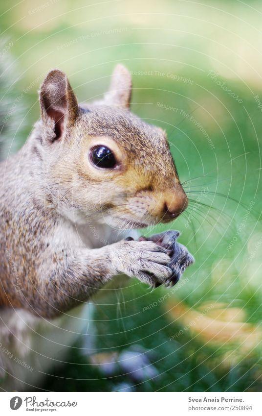 sweeti. Natur Schönes Wetter Wiese Tier Wildtier Tiergesicht Fell Krallen Eichhörnchen 1 festhalten Neugier Fressen Farbfoto Außenaufnahme Textfreiraum oben