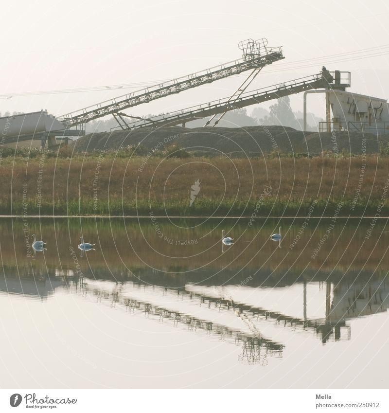 Die Schönen und das Biest Tier Umwelt See Schwimmen & Baden Industrie Tiergruppe Maschine bizarr Teich Schwan Industrieanlage Förderband Arbeitsgeräte