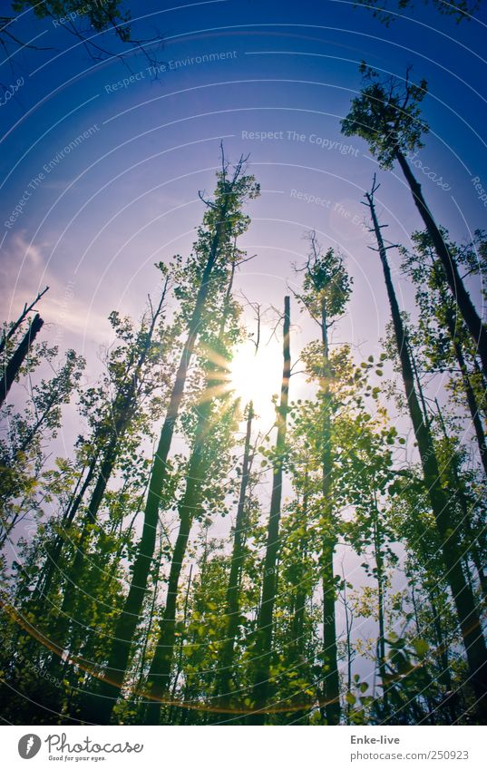MVP Himmel Natur Pflanze Sonne Sommer Wald Umwelt Landschaft Freiheit Küste Stimmung elegant groß Energie Abenteuer außergewöhnlich