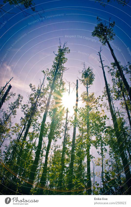 MVP Umwelt Natur Landschaft Pflanze Himmel Sonne Sonnenlicht Sommer Schönes Wetter Wald Küste Flussufer außergewöhnlich bedrohlich fantastisch groß