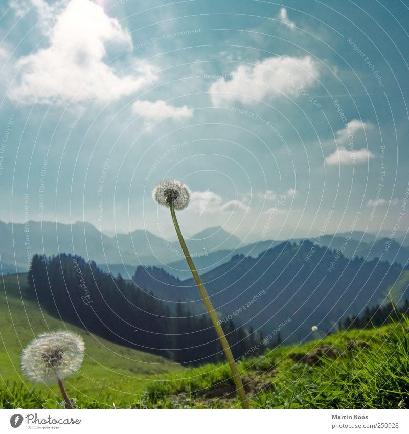 vielflieger Natur Landschaft Pflanze Wetter Schönes Wetter Blume Löwenzahn Wiese Hügel Berge u. Gebirge ästhetisch Ferne frisch Unendlichkeit hell kalt Himmel