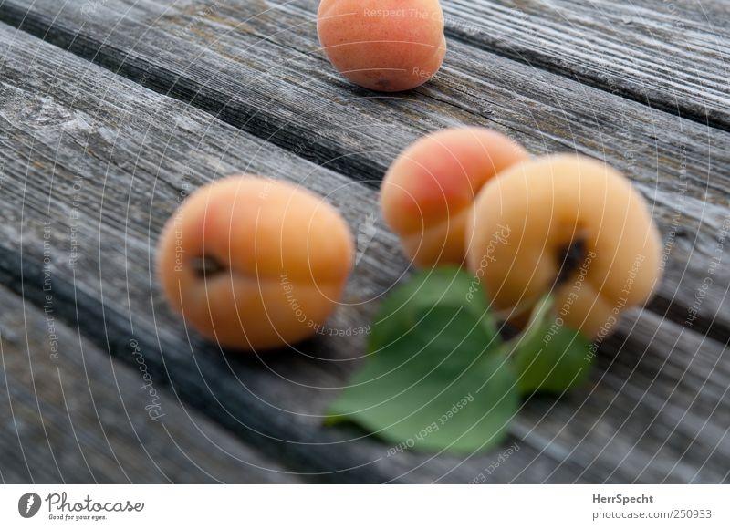 Späte Früchte Holz Gesundheit Frucht frisch Ernte Aprikose