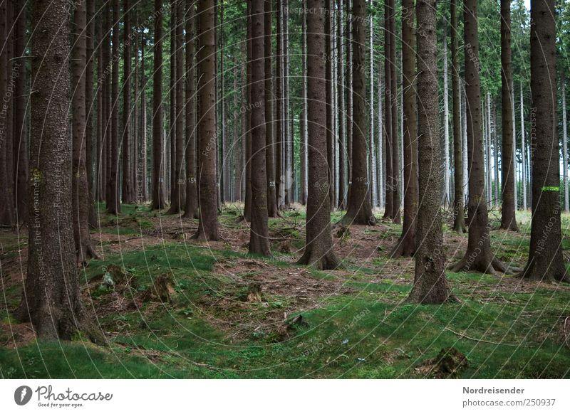 Locker beisammen stehen Natur Baum Pflanze Wald Landschaft Holz Stimmung Erde Zusammensein Kraft groß ästhetisch Zeichen Landwirtschaft stark Forstwirtschaft