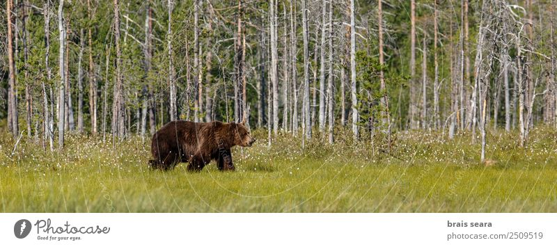 Natur Baum Tier Wald Umwelt Erde braun wild Wildtier Wissenschaften Säugetier Umweltschutz Bär Tierliebe Jäger Safari