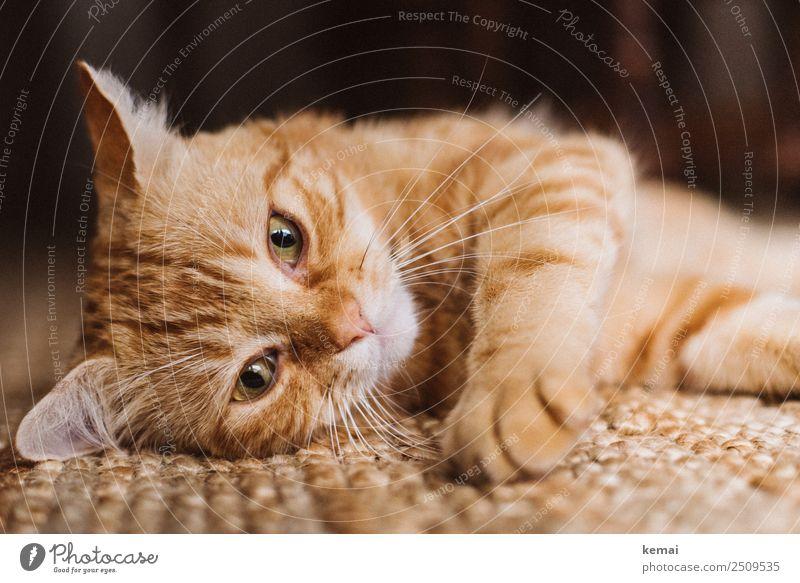 Chillender Kater harmonisch Wohlgefühl Zufriedenheit Sinnesorgane Erholung ruhig Freizeit & Hobby Häusliches Leben Wohnung Teppich Tier Haustier Katze