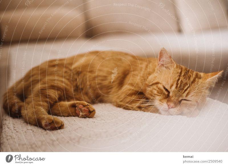 Schlafende Schönheit Lifestyle harmonisch Wohlgefühl Zufriedenheit Sinnesorgane Erholung ruhig Freizeit & Hobby Häusliches Leben Wohnung Sofa Tier Haustier