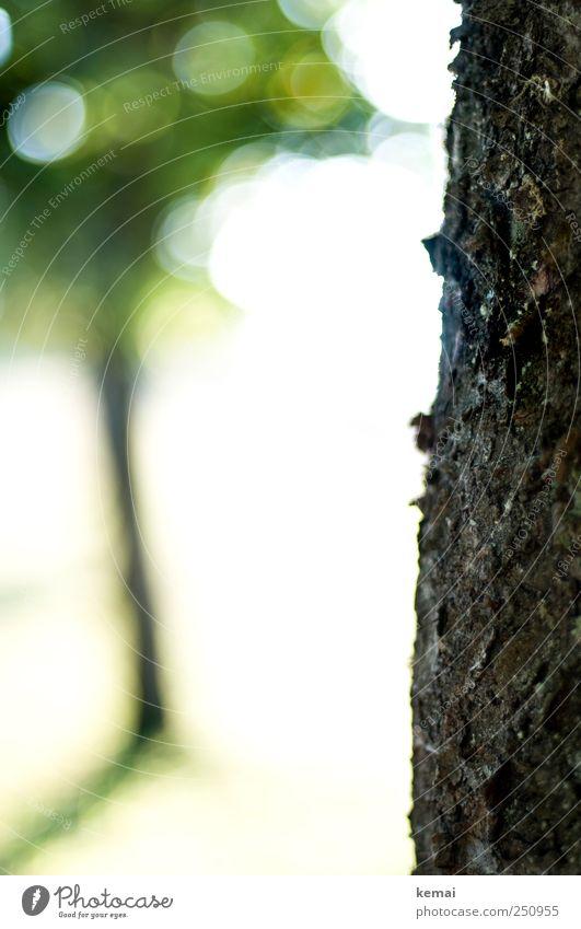 [CHAMANSÜLZ 2011] Baum und Stamm Umwelt Natur Pflanze Schönes Wetter Grünpflanze Baumstamm Baumrinde Park Feld dunkel hell grün Farbfoto Gedeckte Farben
