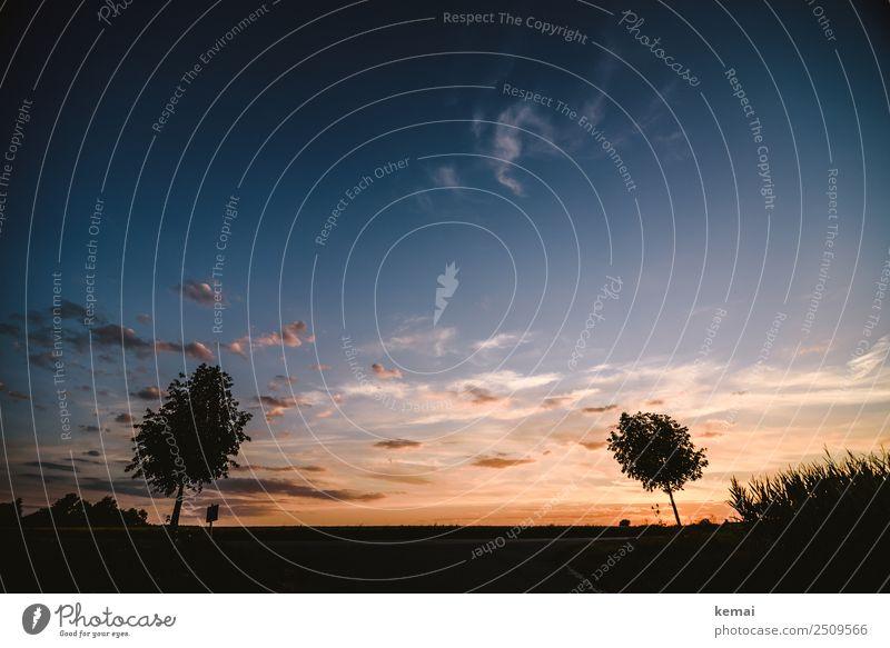 Sommerabend Wohlgefühl Zufriedenheit Sinnesorgane Erholung ruhig Freizeit & Hobby Ausflug Abenteuer Ferne Freiheit Natur Landschaft Himmel Wolken Schönes Wetter