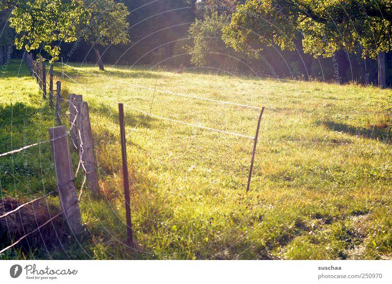 [CHAMANSÜLZ 2011] sülzistan is schön .. Umwelt Natur Landschaft Sommer Wetter Schönes Wetter Wiese Feld grün Idylle Gras Weide Bäume Zaun Landwirtschaft