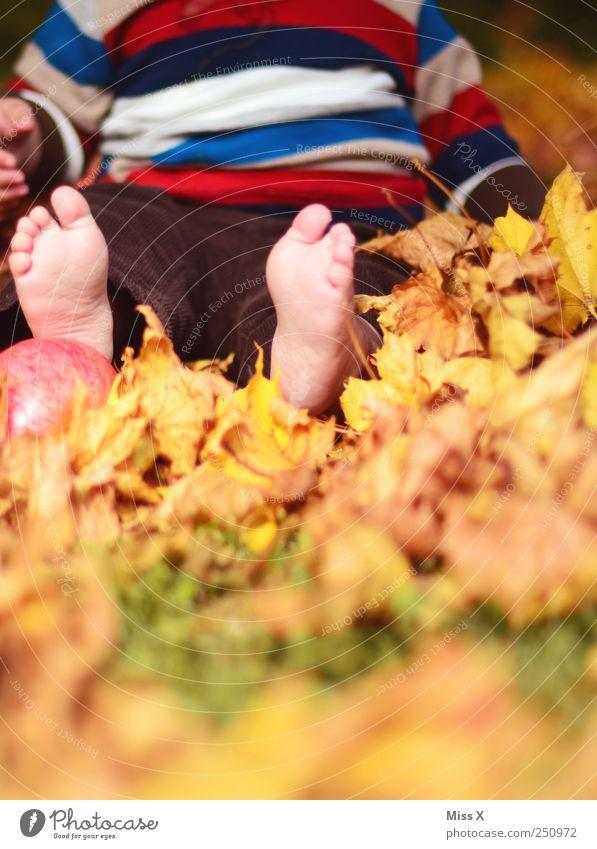 Herbstfüße Kind Mensch Natur Freude Blatt Wiese Herbst Spielen klein Fuß Kindheit Zufriedenheit Freizeit & Hobby Baby sitzen Fröhlichkeit