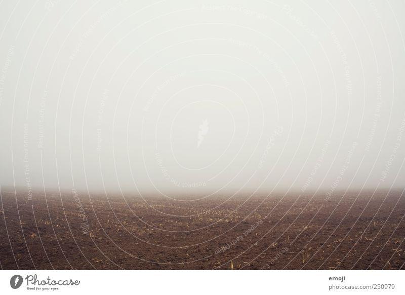 Die Erde ist eine Scheibe. Umwelt Natur Landschaft schlechtes Wetter Nebel Feld dunkel trist Nebelbank Nebelwand Nebelstimmung gruselig weltbild leer Farbfoto