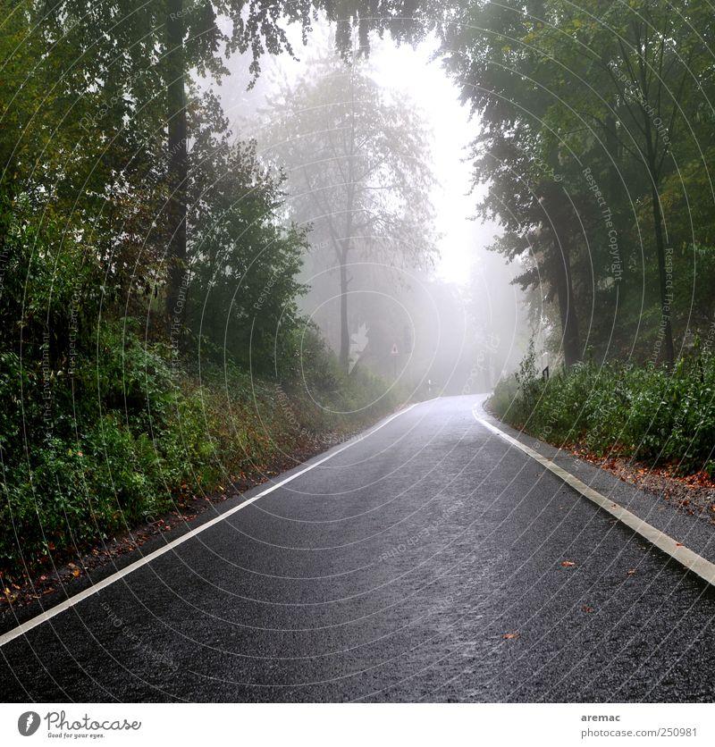 Nebenstrasse ruhig Wald Straße Stimmung Regen Nebel Verkehr Verkehrswege schlechtes Wetter
