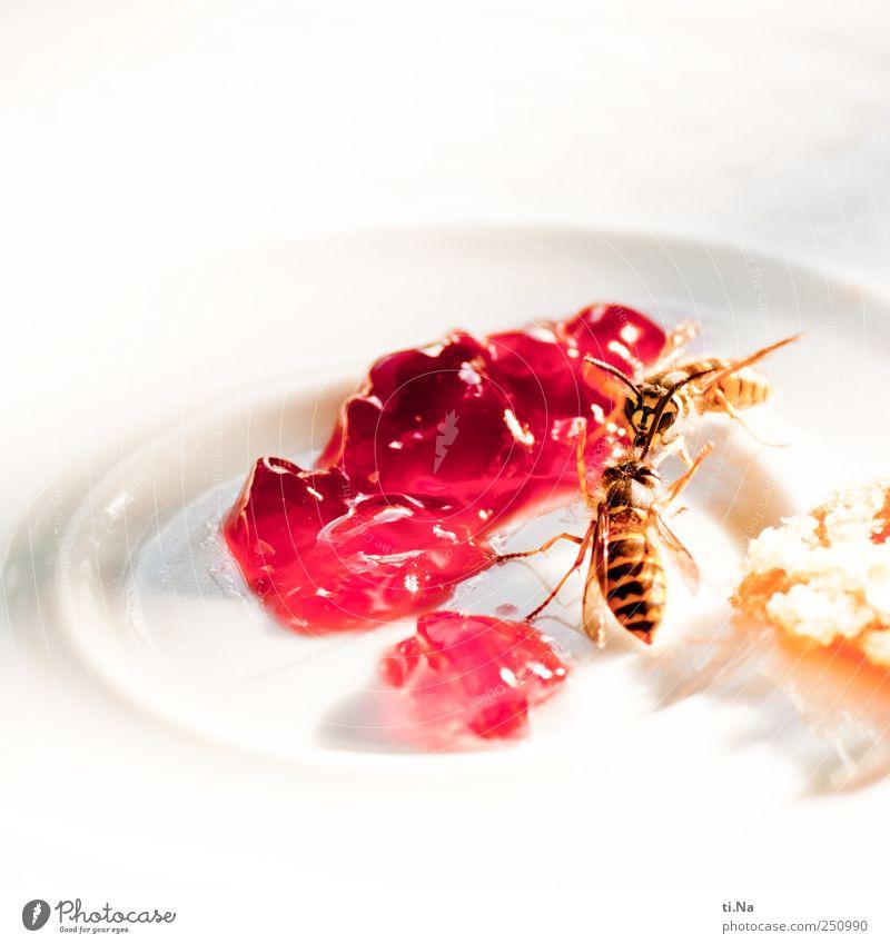 MEINS Tier Lebensmittel Wildtier Teller Frühstück Süßwaren kämpfen Fressen Wespen Marmelade